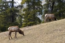Wildlife in Banff National Park