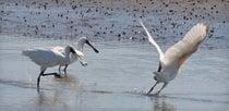 The White Heron Sanctuary Tours