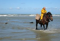 Horseback Shrimp Fishing