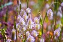 Época de Flores Silvestres