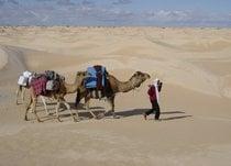 Sahara Camel Trekking