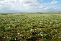 Wildflowers of Steppes