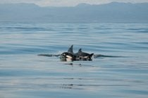 Whale Watching near Olympic National Park