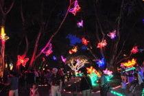 Lumières de Noël de Sarasota