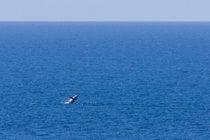 Observation des baleines en Tasmanie