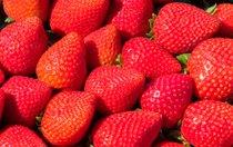 Festival des fraises de Californie (California Strawberry Festival)