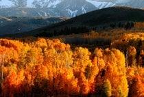 Herbstlaub in Yosemite