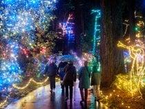 Luces de Navidad de Oregon