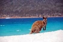 Saison de la plage de Tasmanian