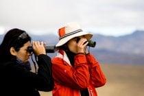 Observación de aves o ornitología