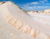 Dunes at Texel