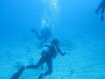 Snorkeling y buceo
