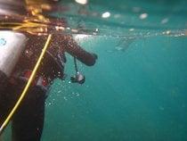 Plongée autour de l'île Santa Catalina