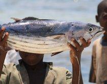 Pesca de atún aleta amarilla