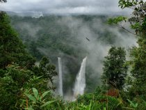 Trekking to Bolaven Plateau & Tad Fane Waterfall