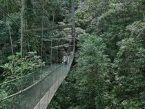 Canopy Walks in Borneo