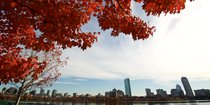 Fall Foliage in & around Boston