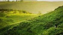 Senderismo en la Reserva Nacional Lomas de Lachay en sus meses más verdes