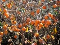 Stagione dei frutti esotici
