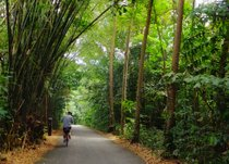 Ride Bikes on Pulau Ubin