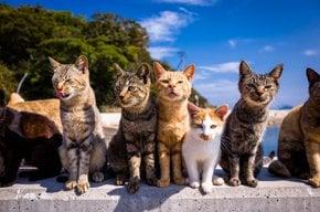 Aoshima (Isla de Cat)