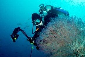Diving in Raja Ampat