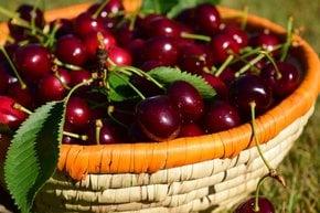Festival de cereja em Kyustendil