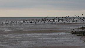 Seabirds in Glan y Môr Elias
