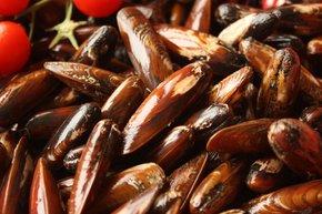Mussel Season