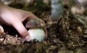 Wild Mushroom Season