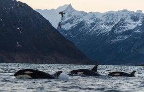 Safari da Baleia