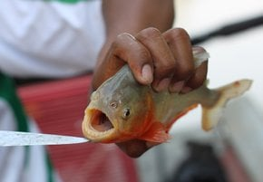 Piranha Fishing