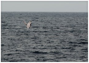 Humpback Whale Watching Season