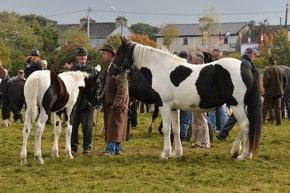 Ballinasloe Pferdemesse und Festival