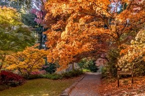 Seattle Fall Colors