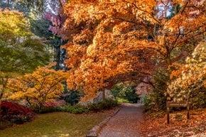 Herbstlaub in Seattle