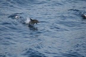 Sporades Dolphins & Seals