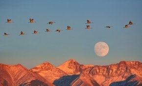 La migración de las grullas