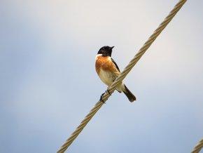 Birdwatching Season