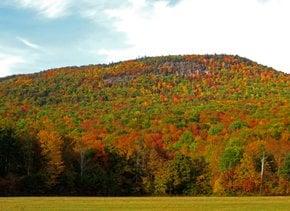 Foliole d'automne du Maine
