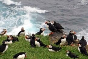 Migrant Birds