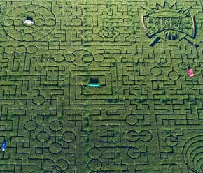 Cool Patch Pumpkins Corn Maze