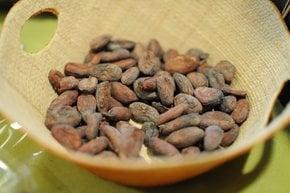 Stagione di raccolta del cacao