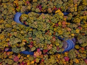 Arkansas Fall Foliage