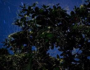 Observación de las luciérnagas
