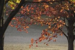 Fall Colors in Atlanta
