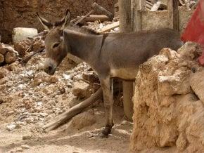 Lamu Donkey Race