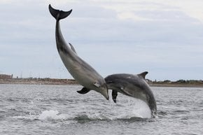 Dolphin and Whale Watching in Scotland