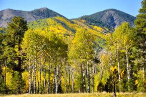 Colores de otoño de Flagstaff