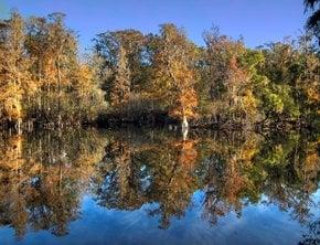 Florida Fall Foliage